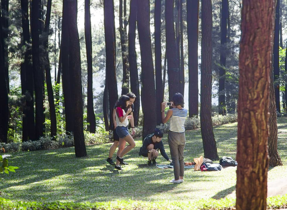 In the Nature of Sentul Pine Forest