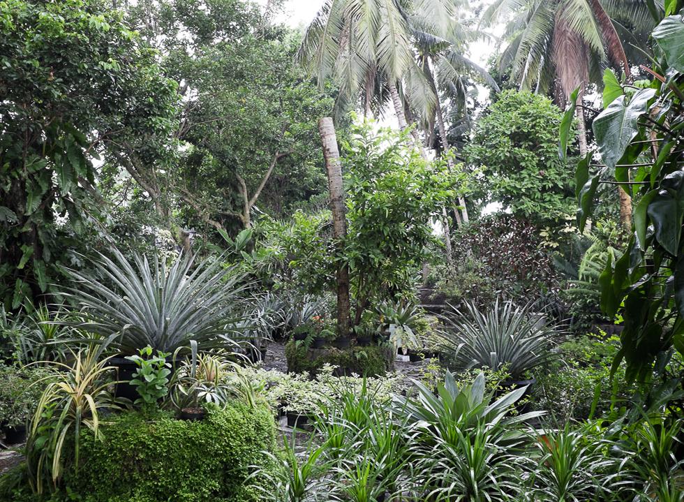 A Stroll in Wijaya Garden