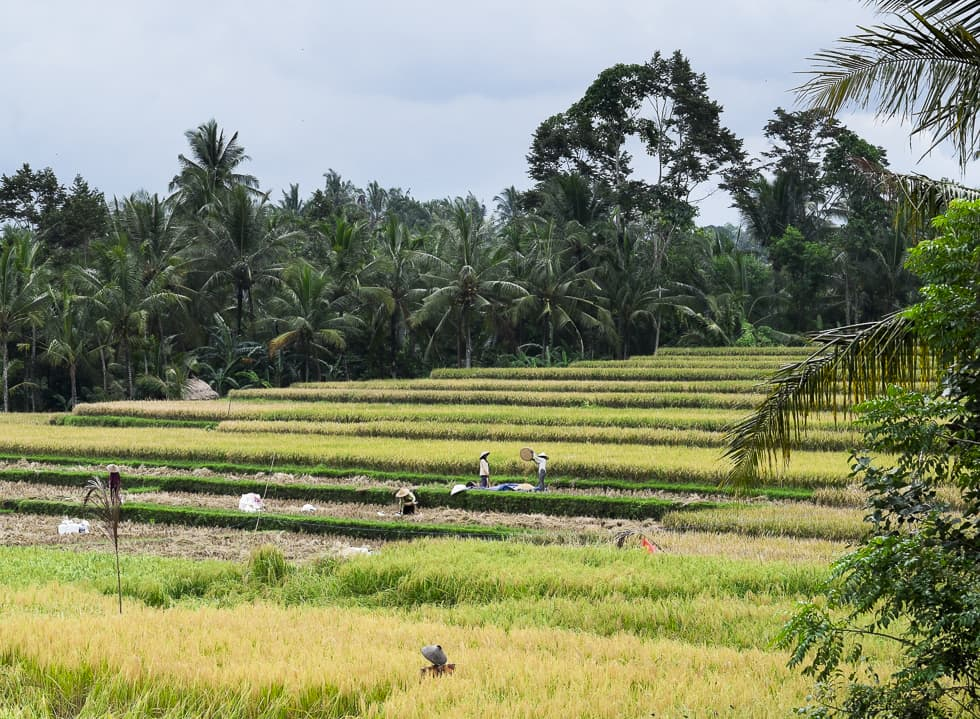Manual Travel Series: Ubud (Part 2)