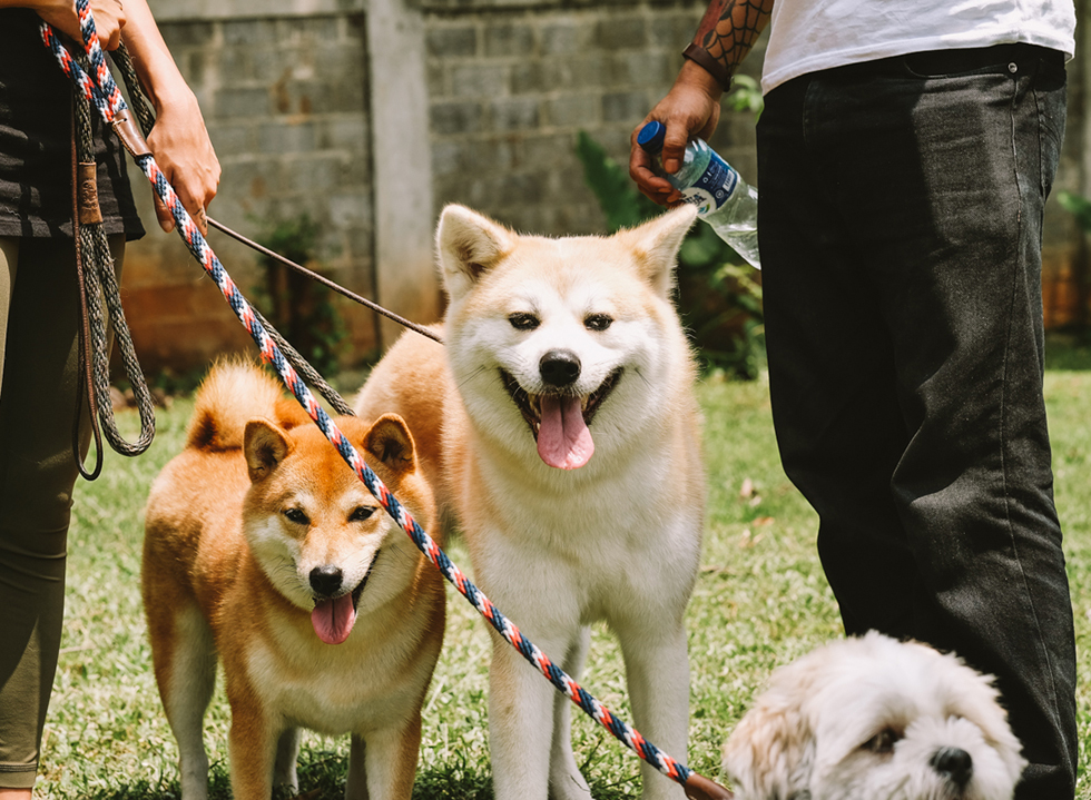 All Dogs Matter at Pooch Party