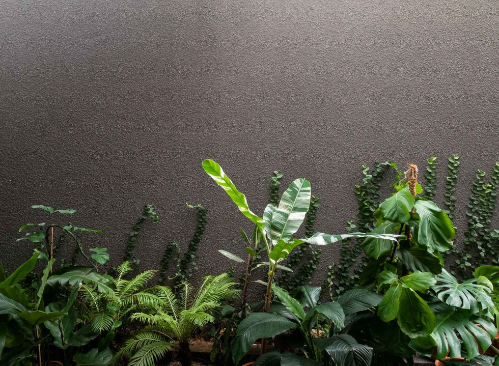 The Spectacular Resurgence of Houseplants