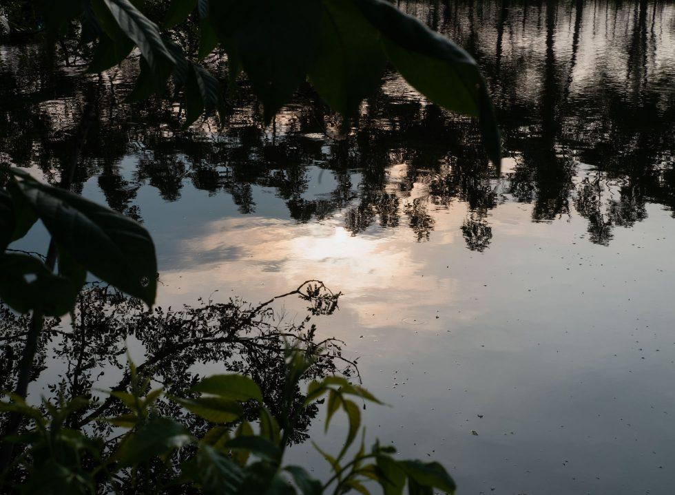 Manual Excursion: Padi-Padi
